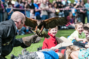 Bird of Prey Display